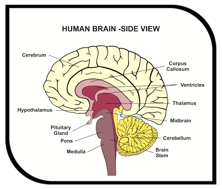 the effects of anxiety on the brain and behavior of an individual Stress effects on the brain and the rest of the body  into human terms, this  phenomenon may help explain the behavior of individuals who are.