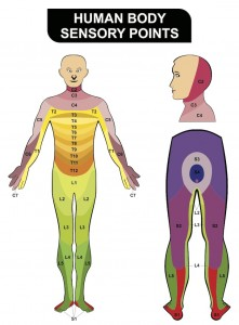 Human body sensory points